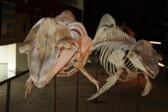 Museo del Mundo Marino de Doñana, Parque Dunar
